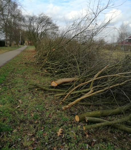 Gemeente Apeldoorn verwacht met vervloekte snoeiactie twee vliegen in één klap te slaan