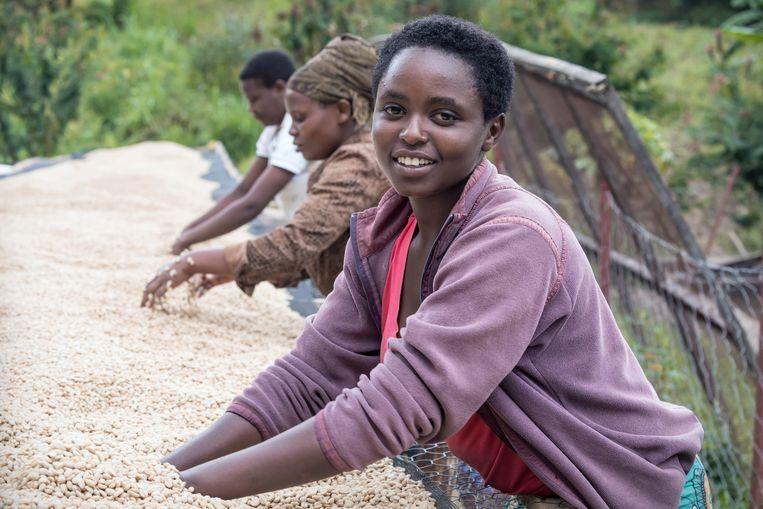 In de heuvels van Rwanda worden koffiebonen gewassen. De vrouwen verdienen gemiddeld zo'n 1 euro per dag.  Beeld Sven Torfinn
