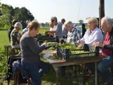 Hopplukkers gezocht in Hilvarenbeek: de oogst bij De Roos is enorm