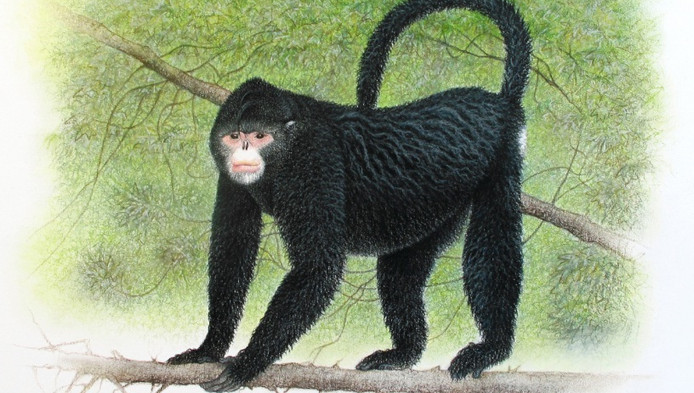 De 'niezende aap'.
