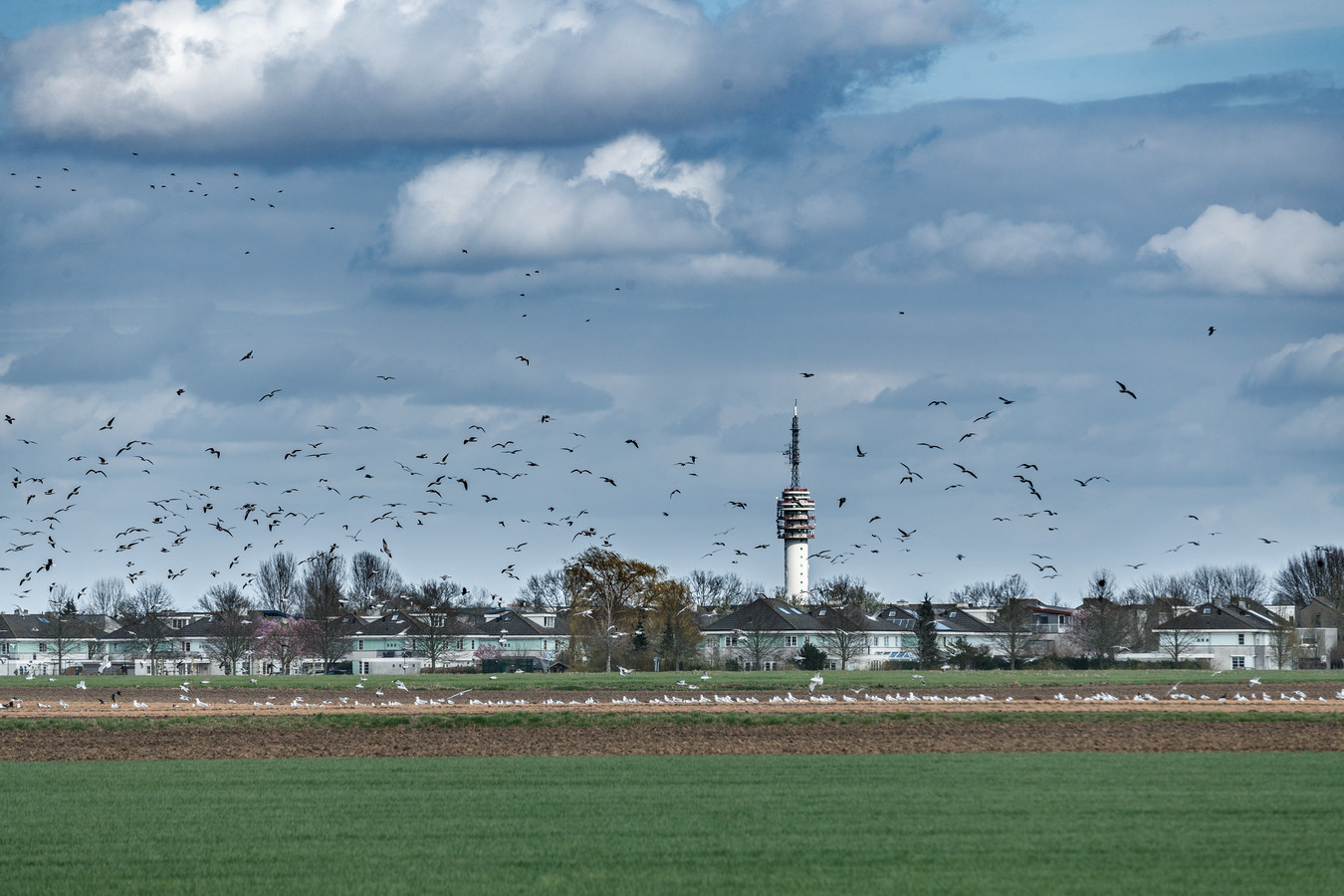De polder, gebied Bulkenaar, ten zuid-westen van Roosendaal is een beoogde plek voor de nieuwbouw van het Bravis ziekenhuis.