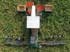 In Beesd helpt een enorme machine met de pompoenoogst