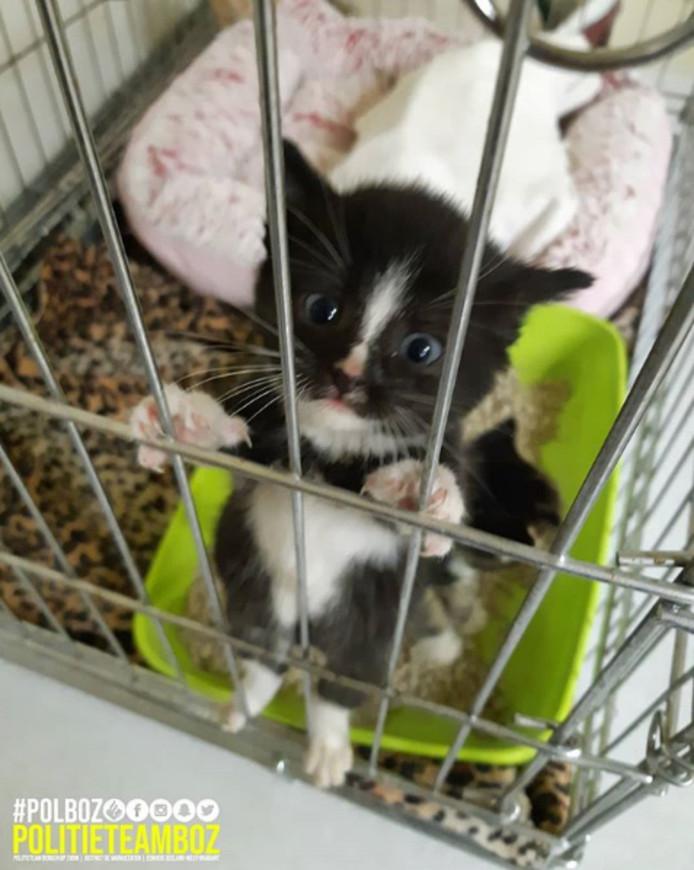 De kittens zijn overgebracht naar een dierenasiel waar ze 'er weer helemaal bovenop komen.'