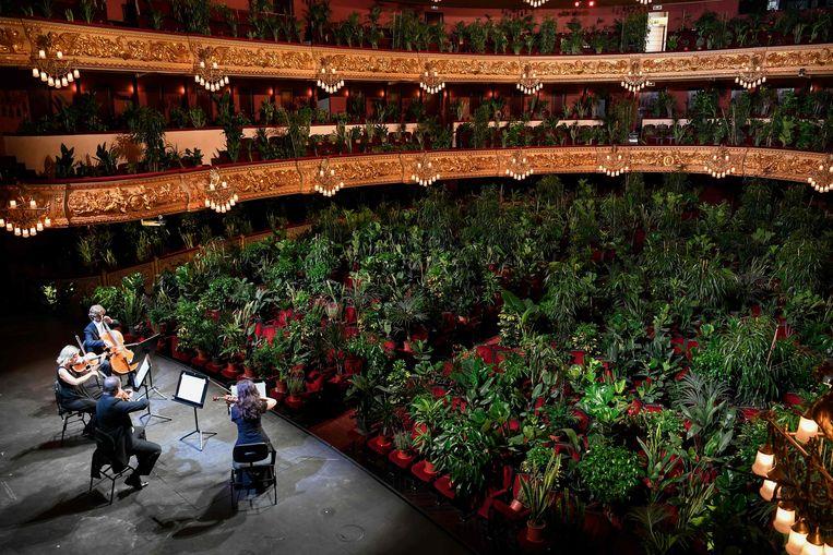 Het Uceli Quartet speelt voor een groen publiek Beeld AFP, Lluis Gene