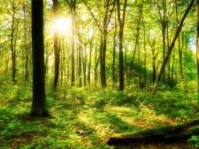 Drie miljard extra bomen: waarom natuurbeschermers daar niet altijd blij mee zijn