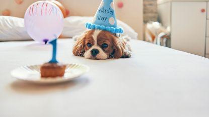 Waarom 1 hondenjaar niet gelijkstaat aan 7 mensenjaren (en hoe je wel de juiste leeftijd van je huisdier bepaalt)