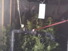 Politie vindt 655 wietplanten in schuur Beneden-Leeuwen