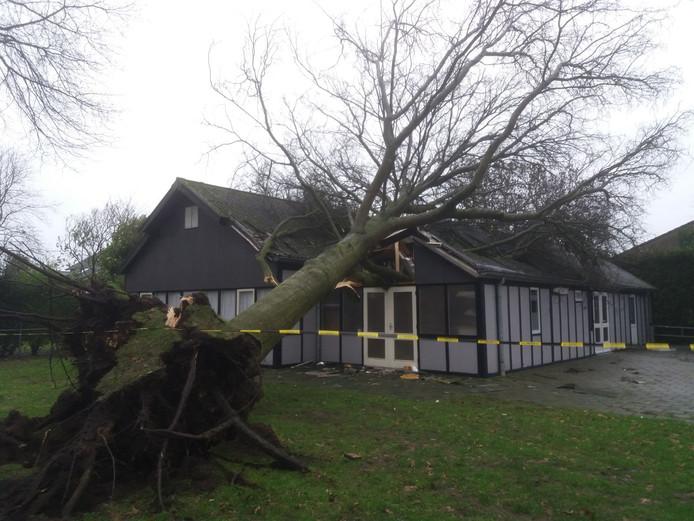 De boom op het Kooykershuus.
