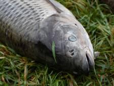 Vies water en ronddrijvende dode vissen in Moordrecht: 'Zwem niet in de Ringvaart'