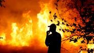 """Trump wijt bosbranden in Californië aan 'mismanagement': """"Er moet een oplossing komen of overheidsbetalingen worden stopgezet"""""""
