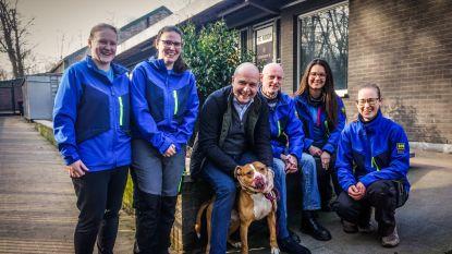 """Dierenasiel 'La Croix Bleue' bestaat 90 jaar: """"Soms worden honden met leiband en al over de omheining gegooid"""""""