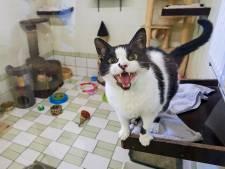 Terugdringen van kitten-explosie kwestie van lange adem