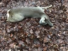 Marcel moet binnen een week twee reetjes afschieten die waren opgejaagd door honden: 'Sporen in blad tonen gruwelijke doodstrijd'