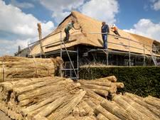 Bouwvakkers met vakantie, rietdekkers werken door op het dak van Herberg van Boxtel in Haaren