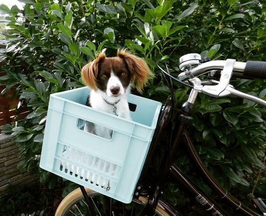 Livia in een krat op de fiets.