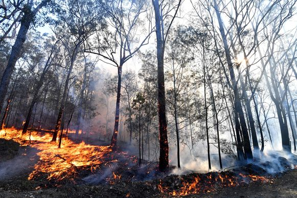 Intussen zijn al vele hectaren door het vuur verwoest, waaronder een belangrijk leefgebied van de koala's.