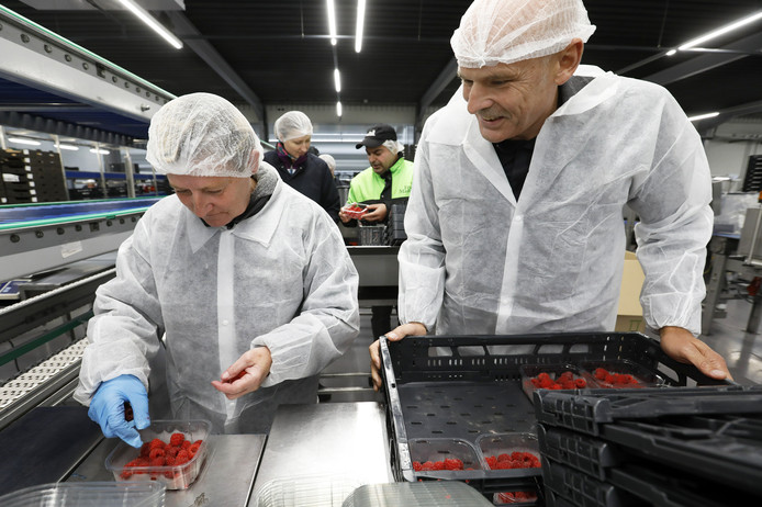 Directeur Cees van Doorn (met witte jas) van uitzendbureau VDU uit Waardenburg, bezoekt woensdag zijn personeel uit Moldavië bij fruitveiling Fruitmasters in Geldermalsen.