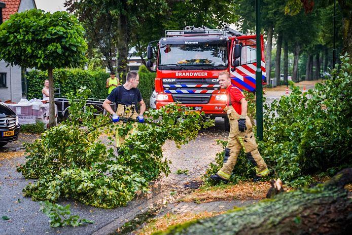 Omgewaaide boom in de Eeuwselsestraat in Nederwetten