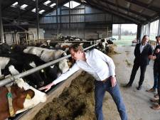 Gedeputeerde Van der Maat komt koeien aaien en praten met melkveehouder in Westerbeek