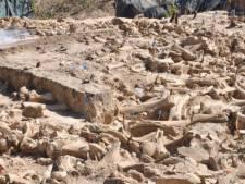 Prehistorische cirkel van mammoetbotten gevonden: 'Geen pretje om tussen rottend vlees te wonen'