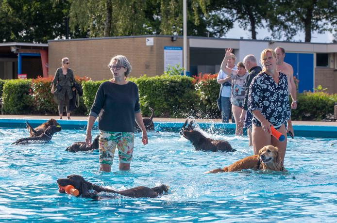 Genieten van het water en het zonnetje voor de viervoeter in zwembad De Vrije Slag.