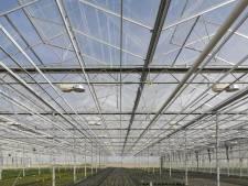 Maasdriel is ontevreden over resultaten tuinbouwplan
