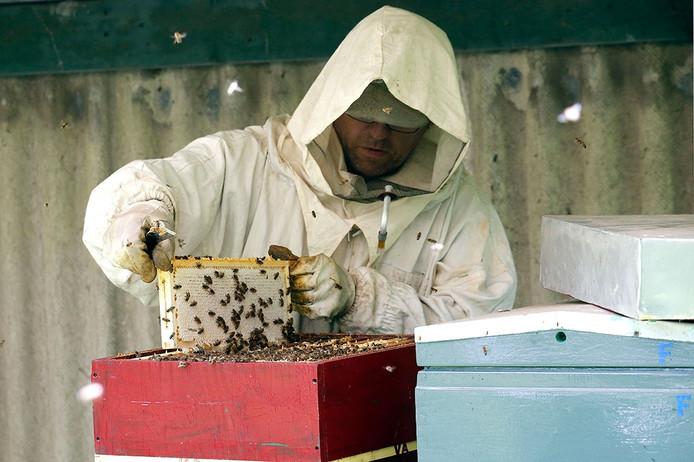 Imker Mario den Brok, aan het werk in de bijenkast