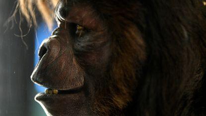 Goed nieuws voor de fans: 'Planet of the Apes' krijgt nog een vervolg