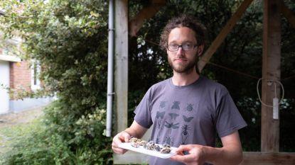 Massale mezensterfte in Vlaanderen: onderzoek naar mogelijk verband met pesticiden