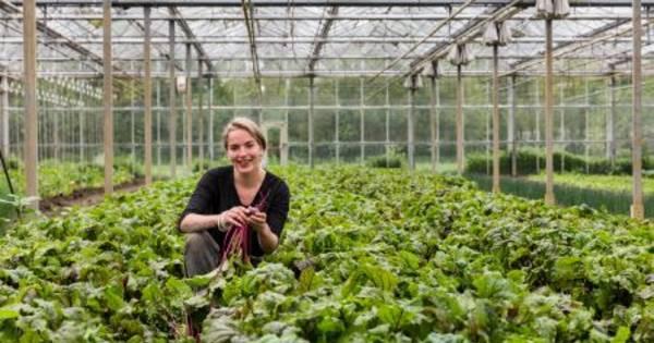 Biologisch-dynamische mbo in Dronten is razend populair