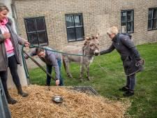 Ezel Piet vindt maatje: 'Hij komt naar huis!'