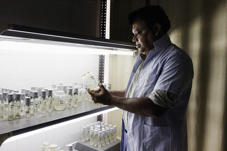 Het Bangladesh Agricultural Research Institute in Joydebpur. Beeld Daniel Rosenthal