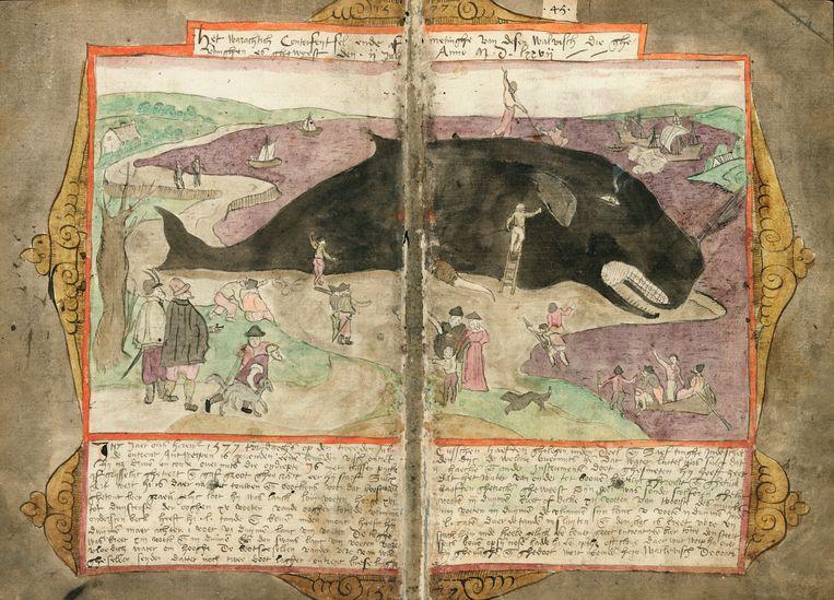 Adriaen Coenensz. van Schilperoort, 'Stranding van een walvis bij Saeftinge in 1577', in: 'Visboeck, 1577-1579', Koninklijke Bibliotheek, Den Haag. Beeld Koninklijke Bibliotheek, Den Haag