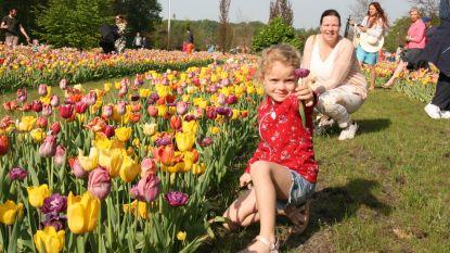 Zelfs duizenden verwelkte tulpen kunnen de pret niet bederven
