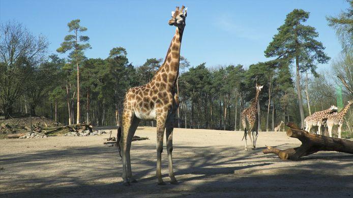 'Silent Zoo': een nieuwe videoserie van Burgers' Zoo in Arnhem. Tot nu toe staat er ruim zeven uur aan video online.