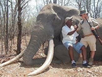Amper 3 maanden na leeuw Cecil: Duitse jager doodt grootste olifant in 50 jaar en poseert trots bij jachttrofee