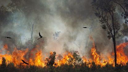 Gebruikten vogels vuur vóór de mens?
