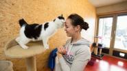 """""""Mensen nemen impulsiever dier in huis door sociale media"""""""