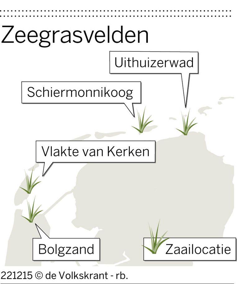 Zeegrasvelden Beeld