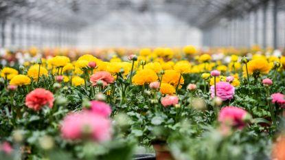 Deze floristen leveren bloemen aan huis op Moederdag