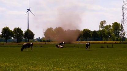 Opmerkelijke stofhoos gefilmd in Hamme