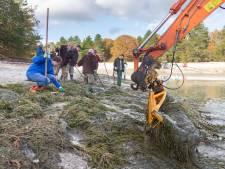 Gevaarlijke onderwaterplant is verwijderd: in de zomer kun je weer zwemmen in de Zwarte Dennen