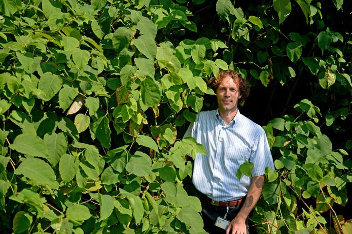 Walter van Dijk van Gildebor bij een enorme bos Japanse duizendknoop.