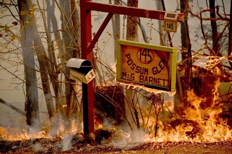 De Australische overheid heeft de noodtoestand uitgeroepen in het land. Er woeden momenteel zo'n tweehonderd branden in Australië, waarvan het grootste deel in de staat New South Wales (waar Sydney ligt). Beeld AFP
