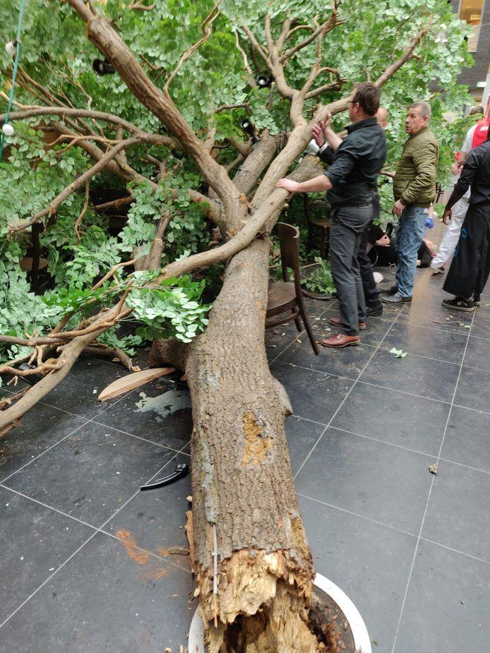 De omgevallen boom in het Alrijne Ziekenhuis