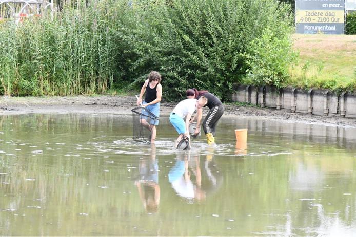 130cd37b01b Kinderen redden honderden vissen in nood uit vijver in Etten-Leur ...