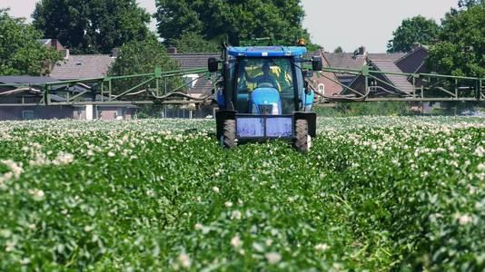 De akkers  zijn al weken kurkdroog. Schaarste maakt creatief. Zo spuit aardappelteler Paul Horevoorts 'zonnebrand' over zijn planten. De vloeistof zorgt voor een laagje calciumcarbonaat dat voorkomt dat de aardappelen uitdrogen.