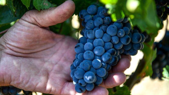Europese wijnproductie op laagste niveau sinds WO II