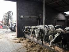 Opkoopregeling koeien binnen 1 dag vol