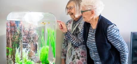 Vissen zorgen voor rust en ontspanning bij dementerende ouderen in Nijverdal